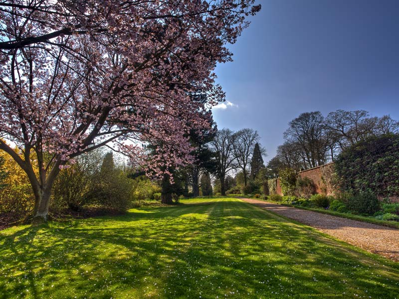 Trees in blossom wallpaper picture taken at Whatton Gardens 800x600