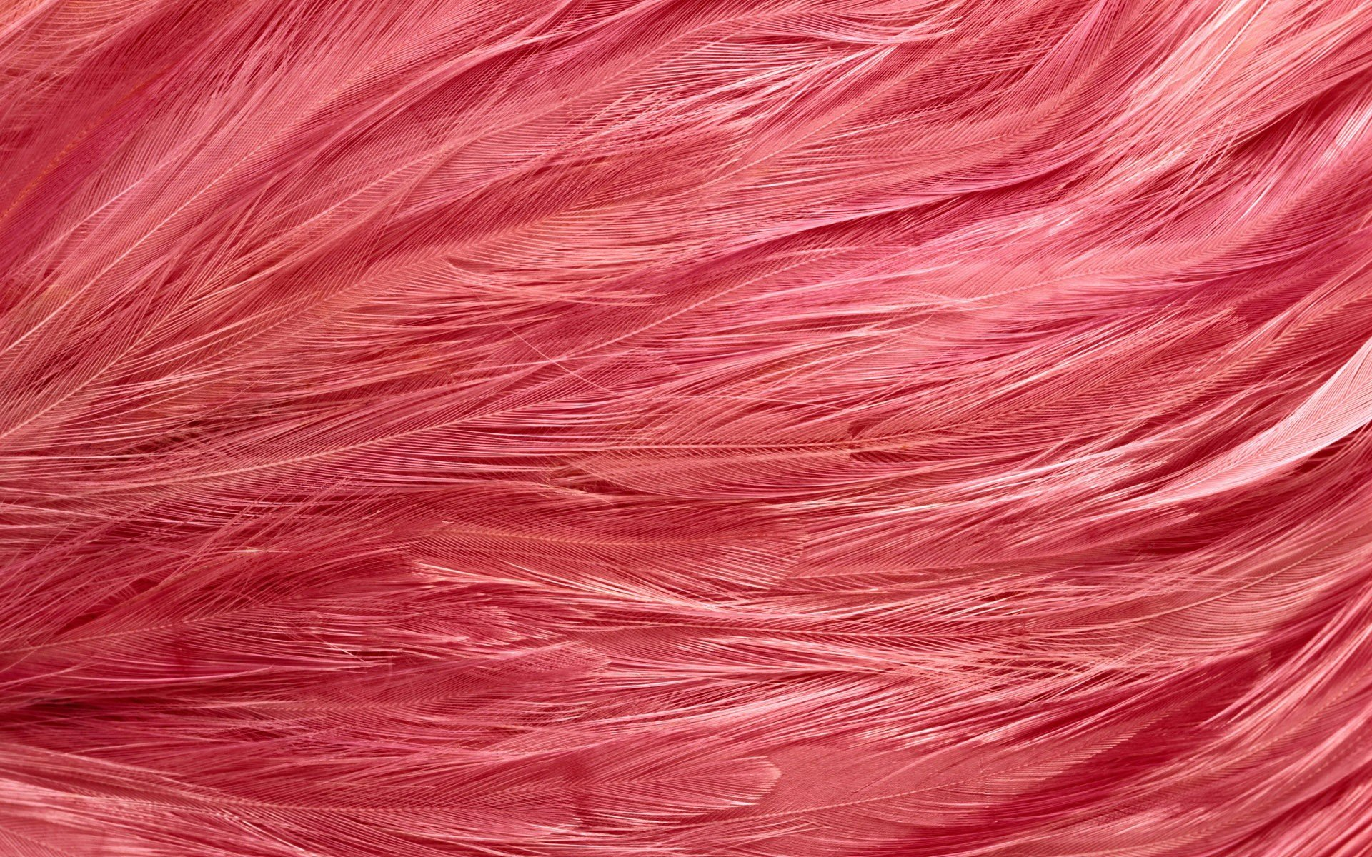 Feathers Wallpapers Pink Feathers Myspace Backgrounds Pink Feathers 1920x1200