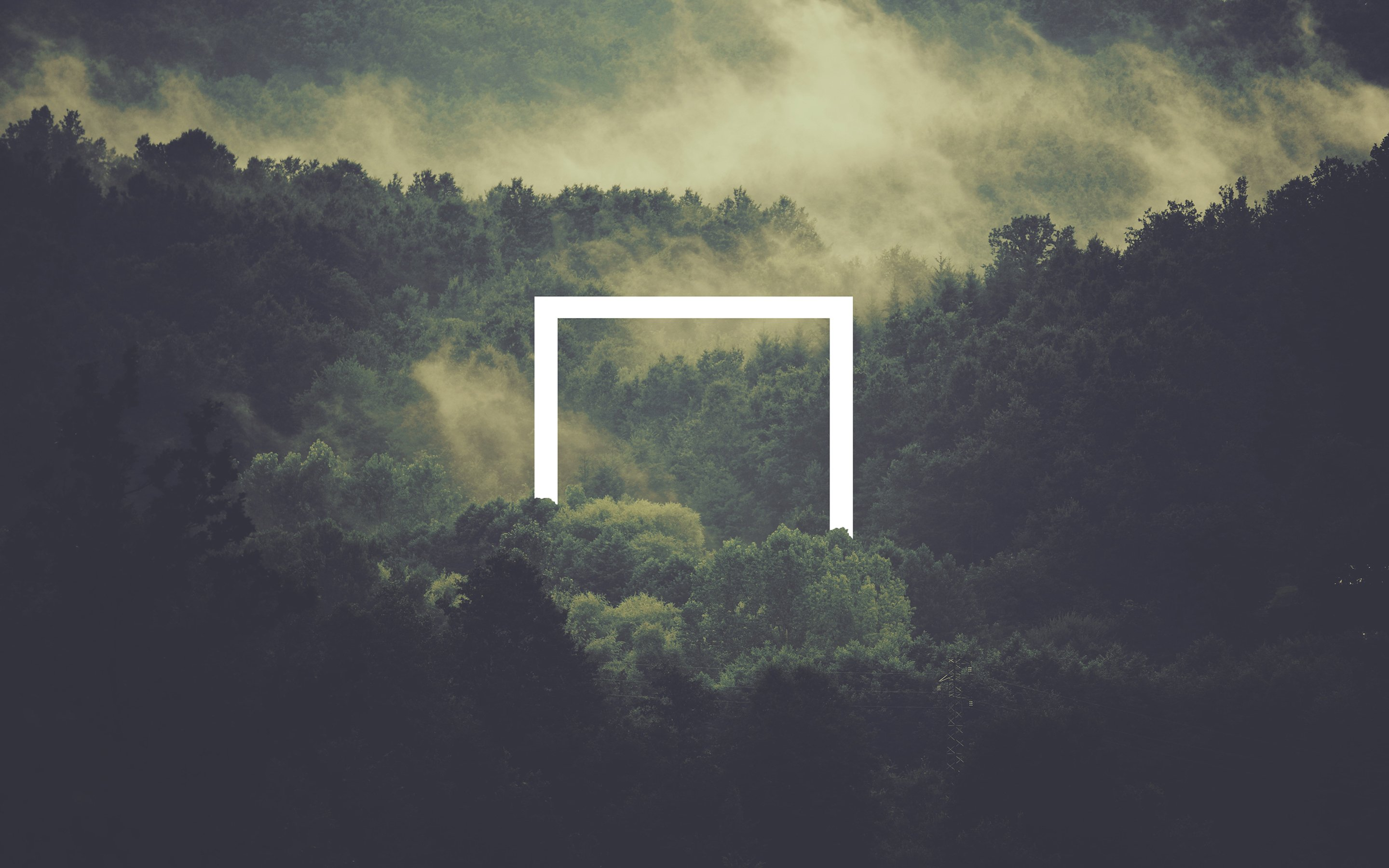 37 Foggy Forest Wallpapers On Wallpapersafari