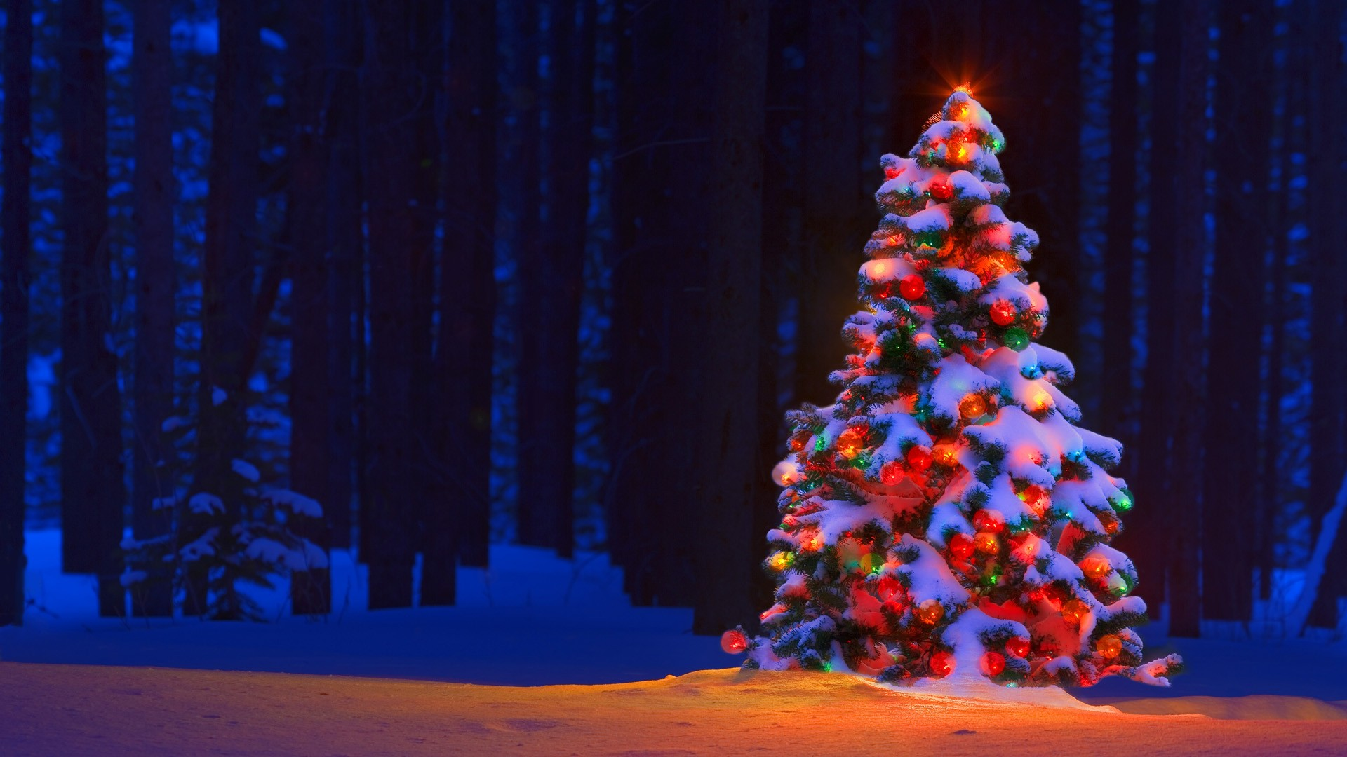 christmas tree lights bokeh forest trees snow winter color wallpaper 1920x1080