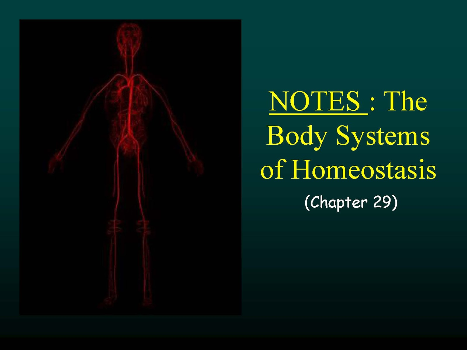 The Human Body Systems of Homeostasis 1600x1200