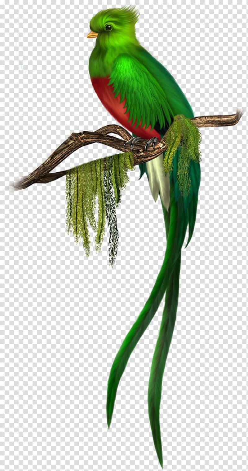 Bird Quetzal Green Green Bird red breasted green bird 800x1520