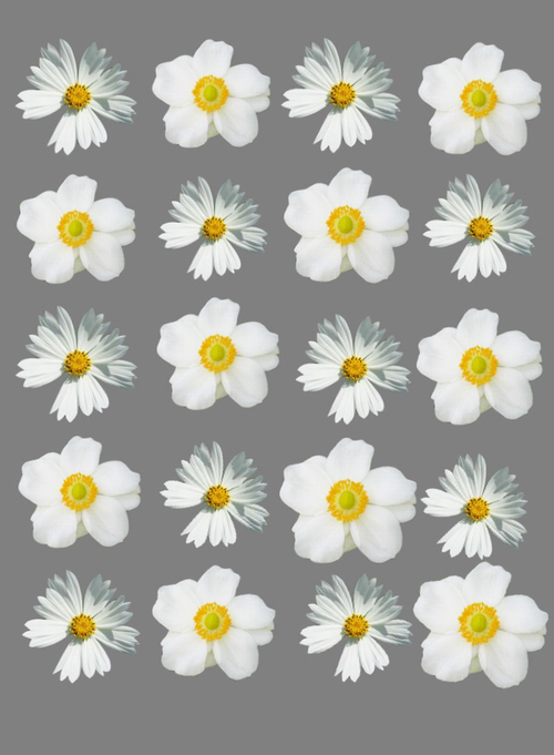 Tumblr Backgrounds Flowers Daisy Background and daisy 500x681
