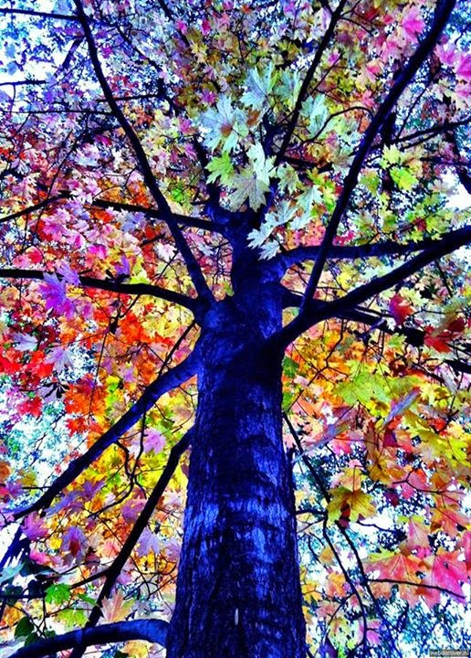 Very Unique And Rare Colorful Trees HD Wallpapers Update 516x720
