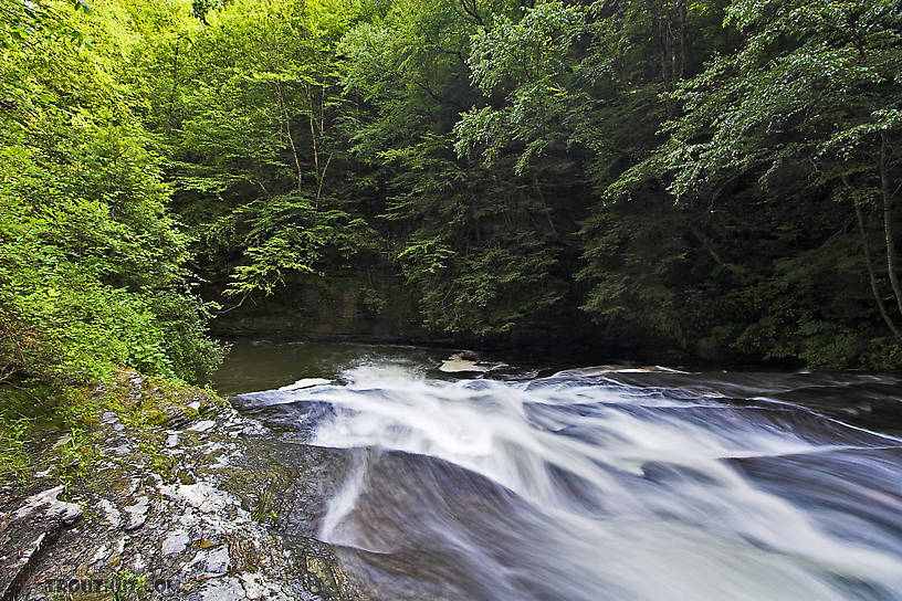 Trout Stream Wallpaper 816x544