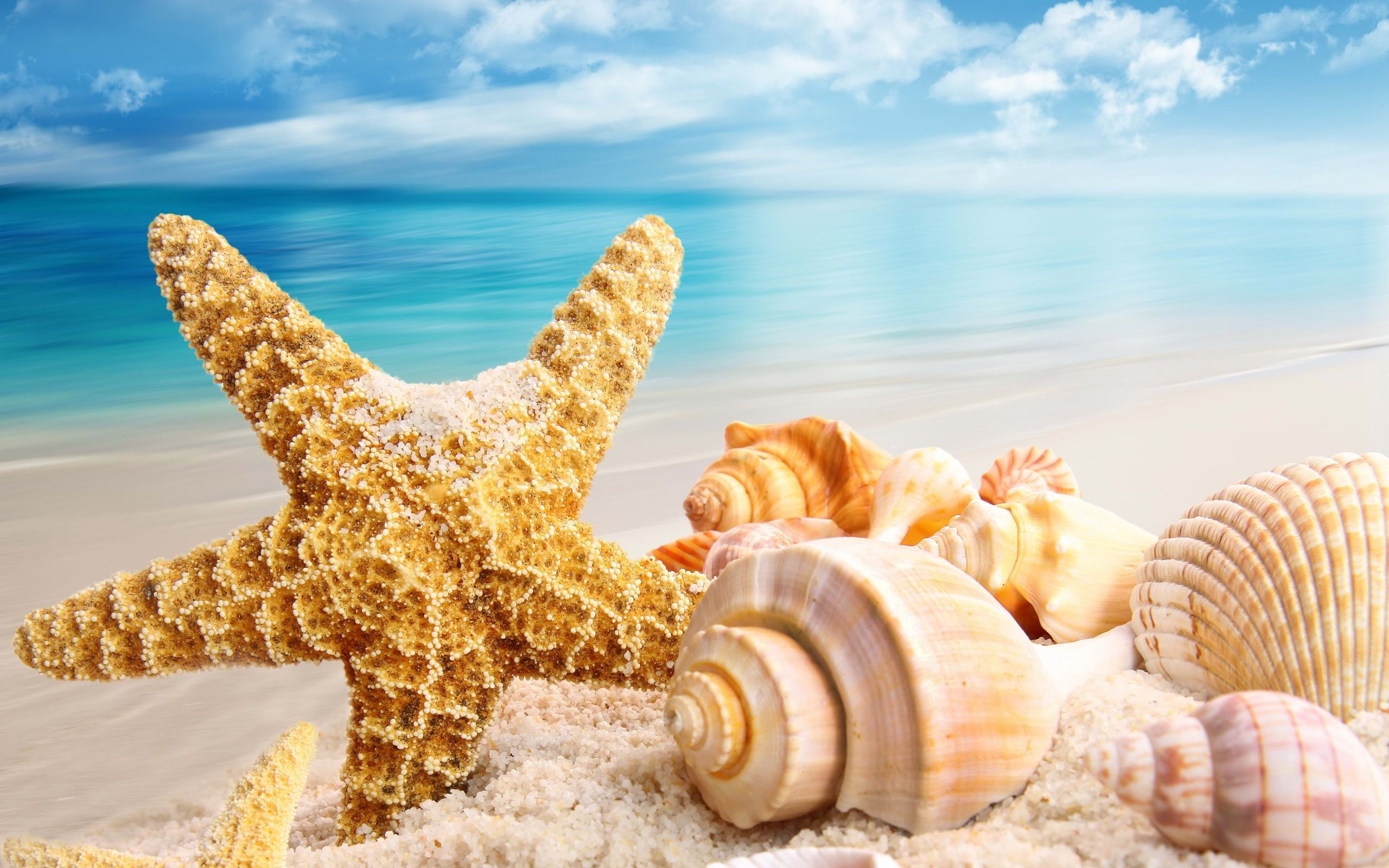 Beach Shells Wallpaper   Bing Images BEACHIN Sea shells Beach 2560x1600