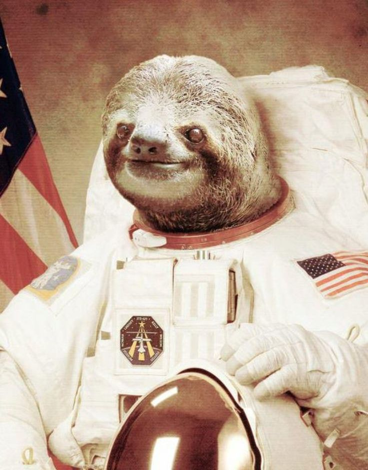 slothstronaut Picture Animals Sloths Funny Stuff Things Smile 736x938