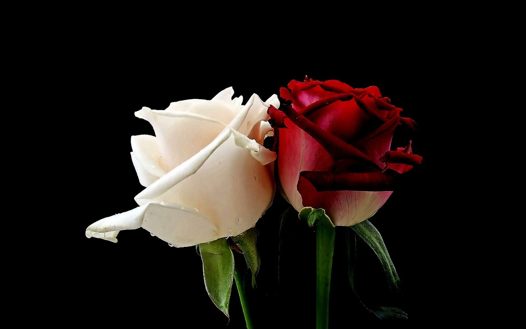 Hd Red Rose Wallpaper Wallpapersafari