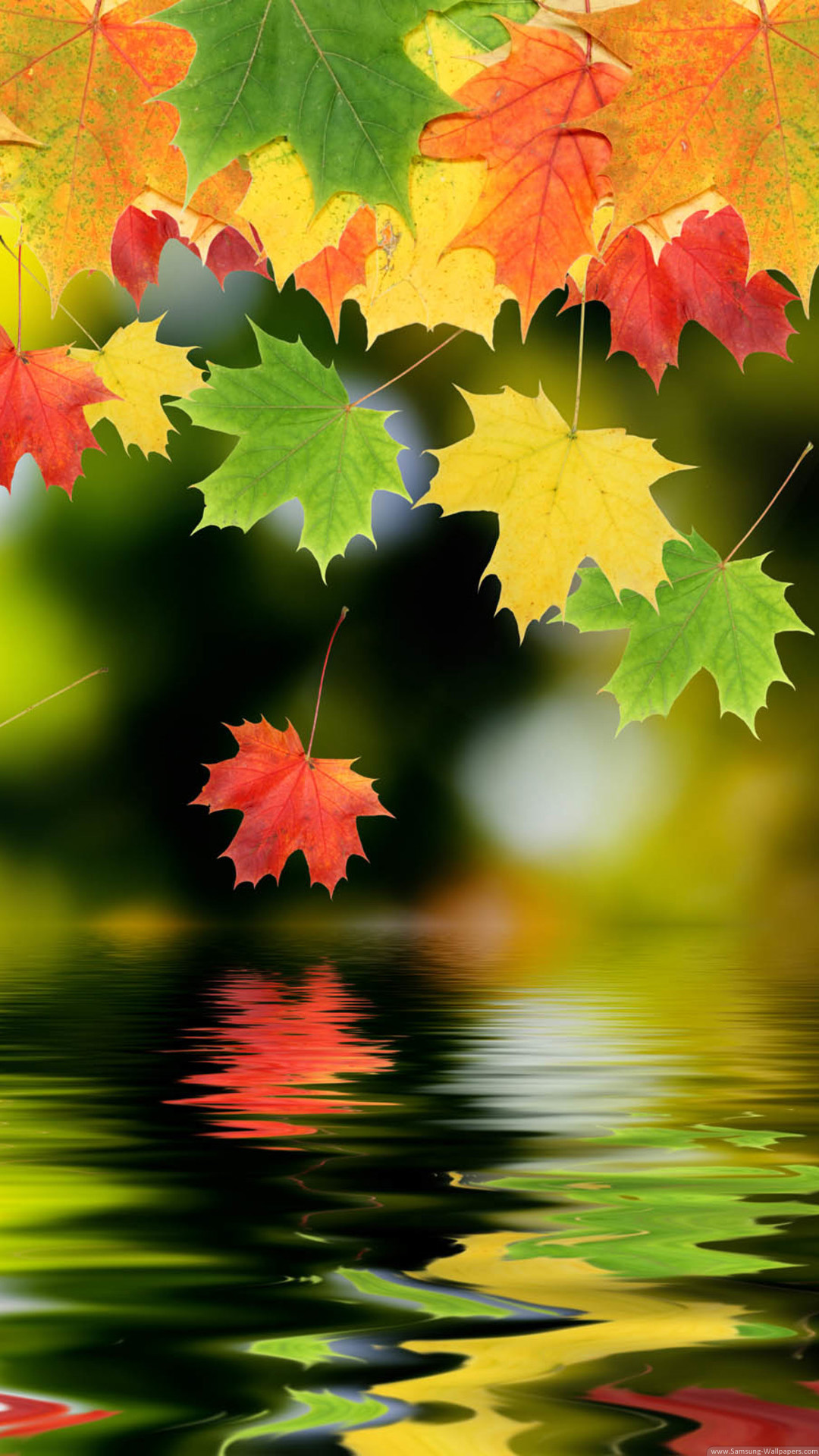 Autumn Maple Leafs iPhone 6 Plus HD Wallpaper iPod Wallpaper 1080x1920