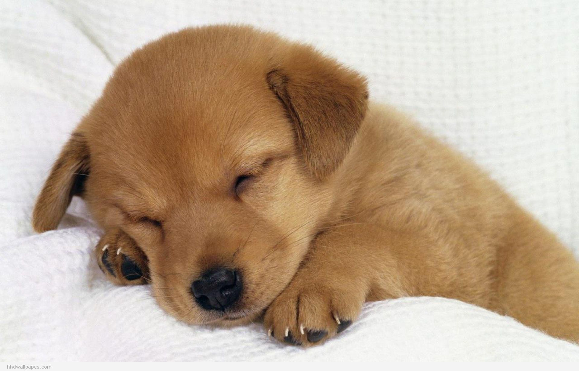 48] Cute Puppy Wallpaper HD on WallpaperSafari 1920x1230