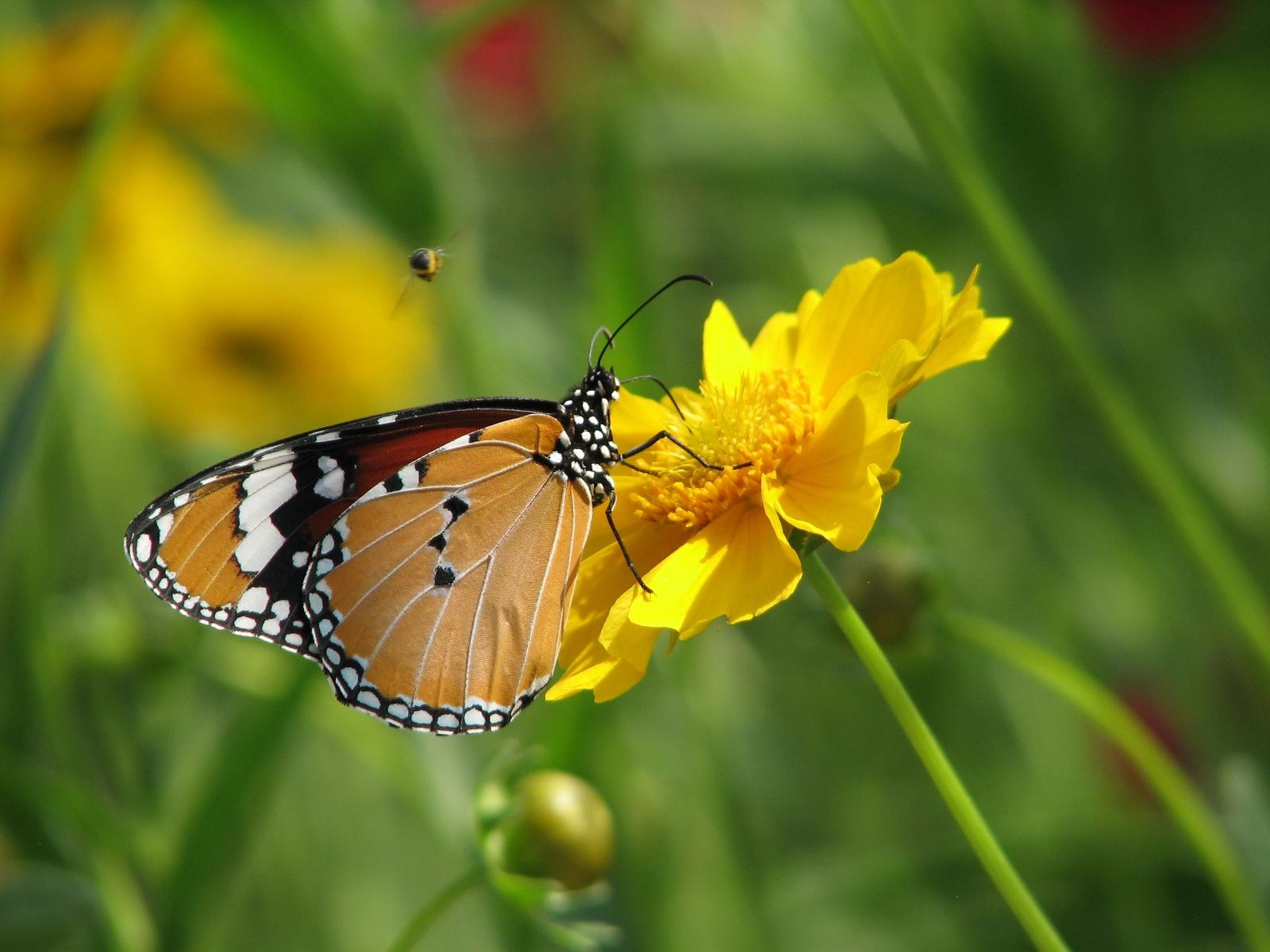 flowers for flower lovers.: HD flowers N butterfly desktop wallpapers.
