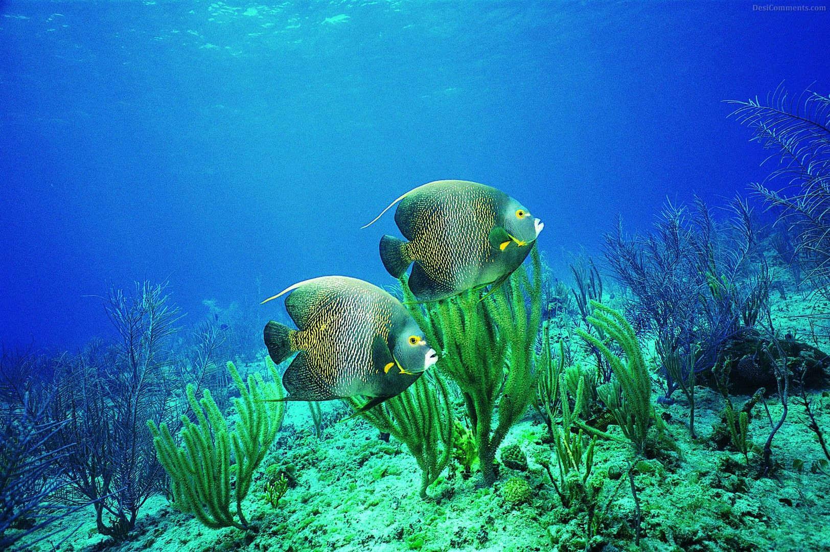 Hd wallpaper underwater - Live Underwater Wallpapers