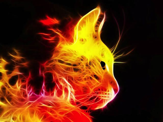 Espectaculares imgenes de animales en colores electrizantes 640x480