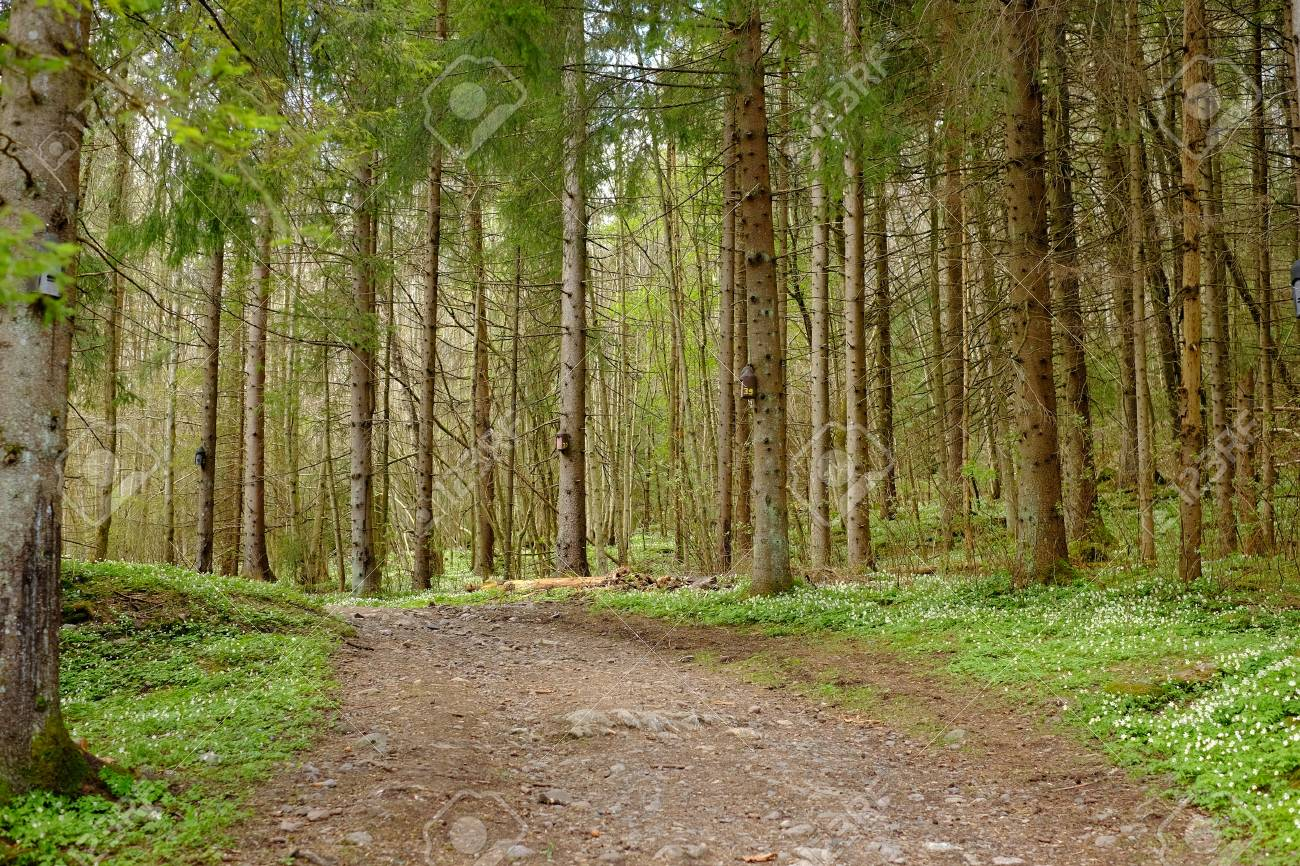 Forest Trail Nature Landscape Tree Background Green Stock Photo 1300x866