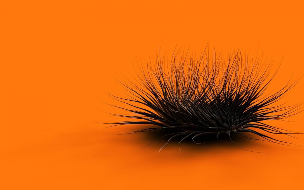 Orange Black Feathers Form   Stock Photos Images HD 1040x650