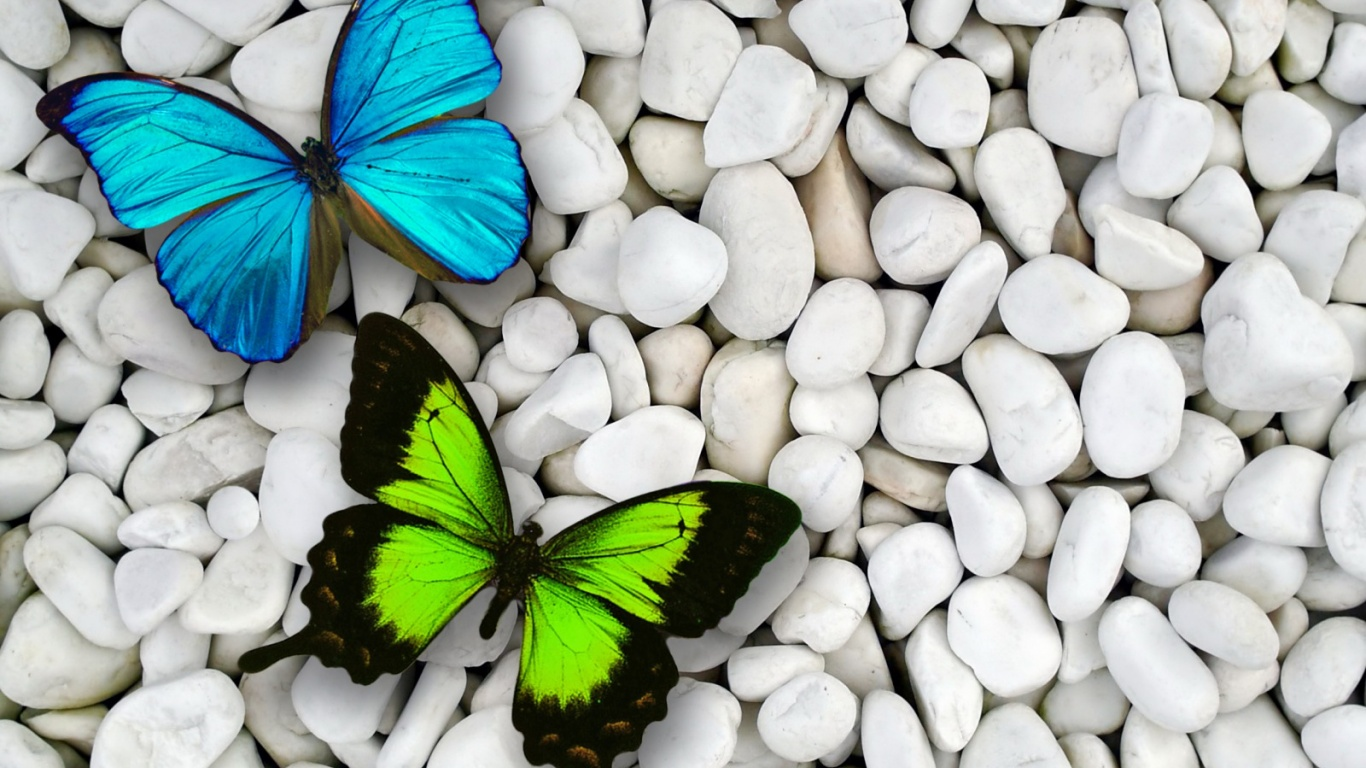 Butterflies images Awesome Butterflies HD wallpaper and background 1366x768