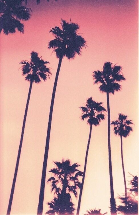 Beautiful Palm Trees iPhone Wallpapers - WallpaperSafari Palm Trees Backgrounds Tumblr