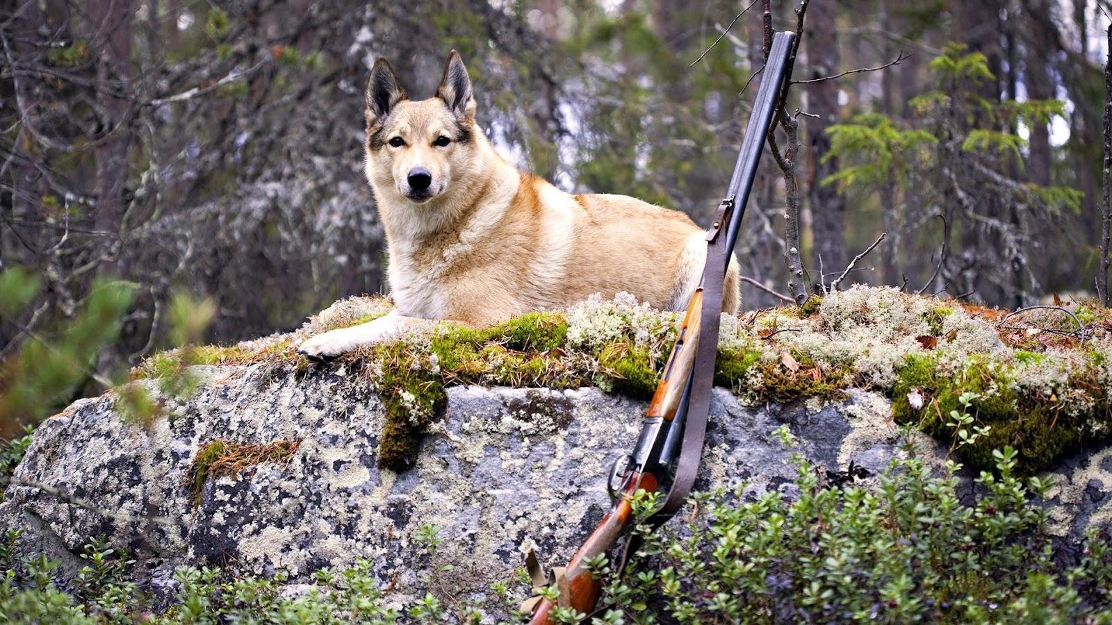 Hunting Shotguns HD Wallpapers Military WallBase 1600x900