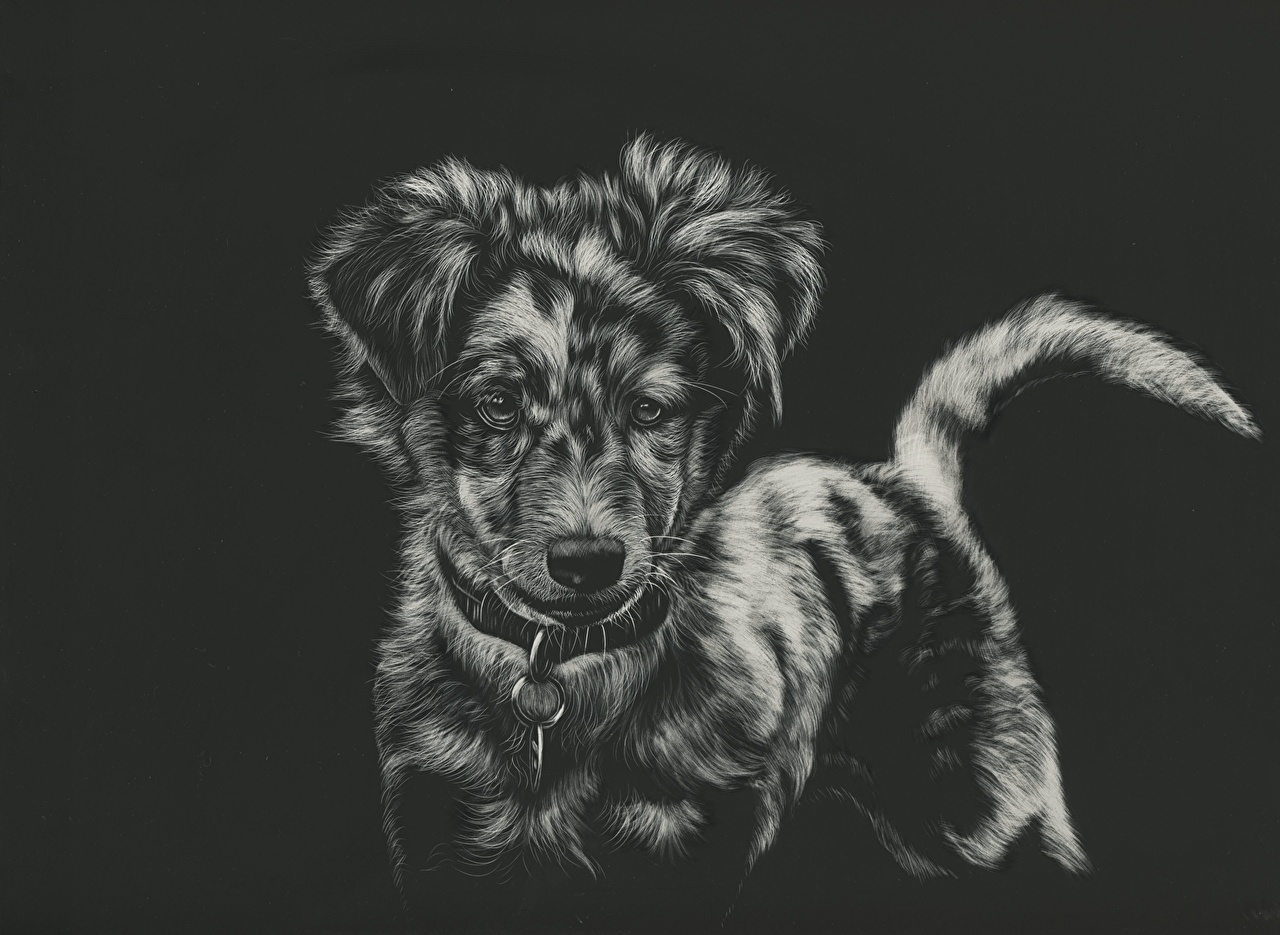Images Dogs Black and white Animals Painting Art Black background 1280x935