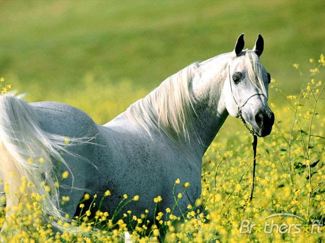 Download Horses Screensaver Horses Screensaver 10 640x480