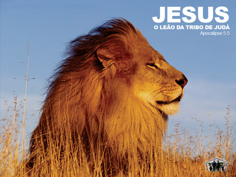 Lion of Judah Wallpaper   Christian Wallpapers and Backgrounds 800x600