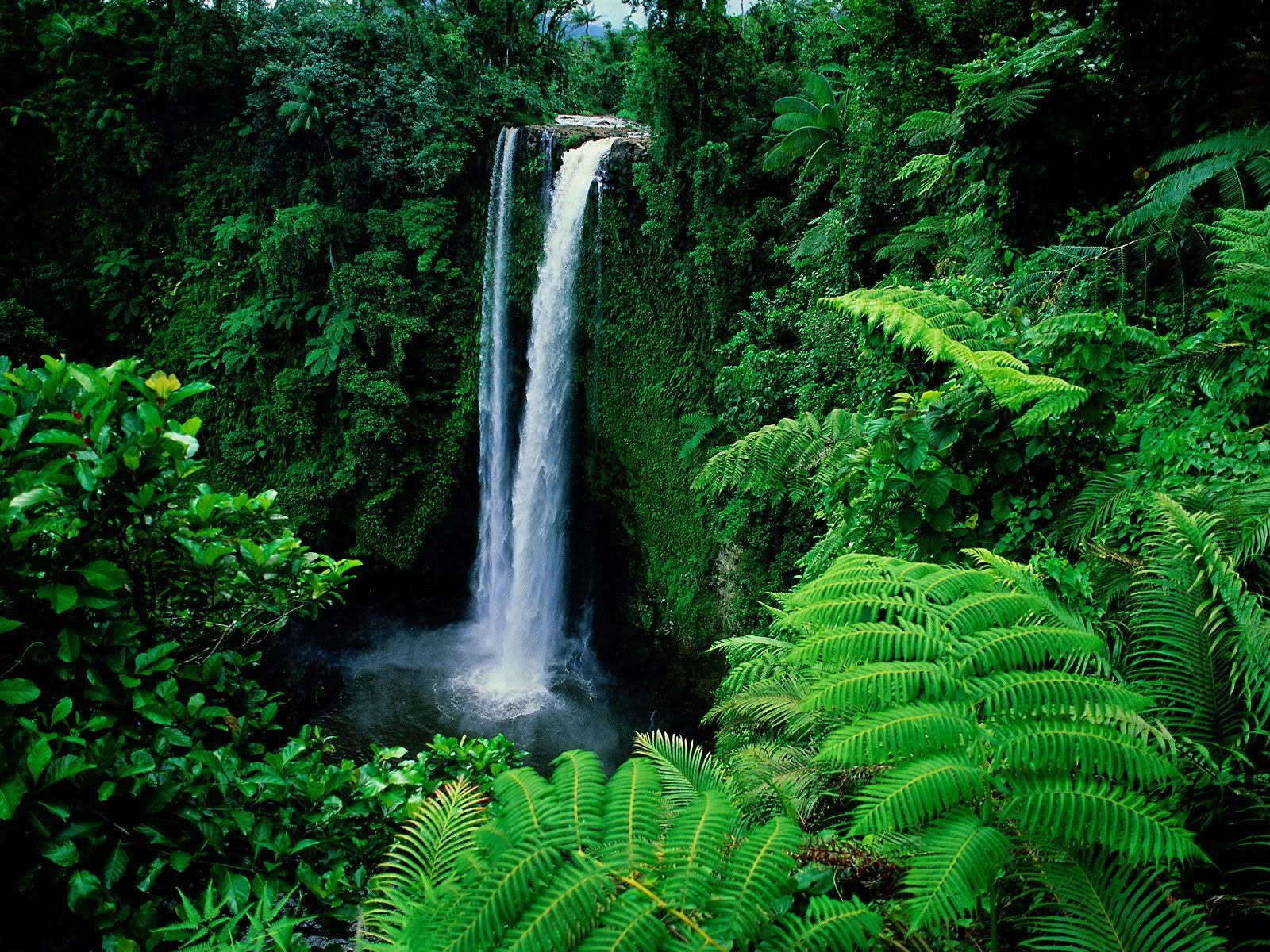 Green Forest With Waterfalls HD wallpapers   Green Forest With 1600x1200