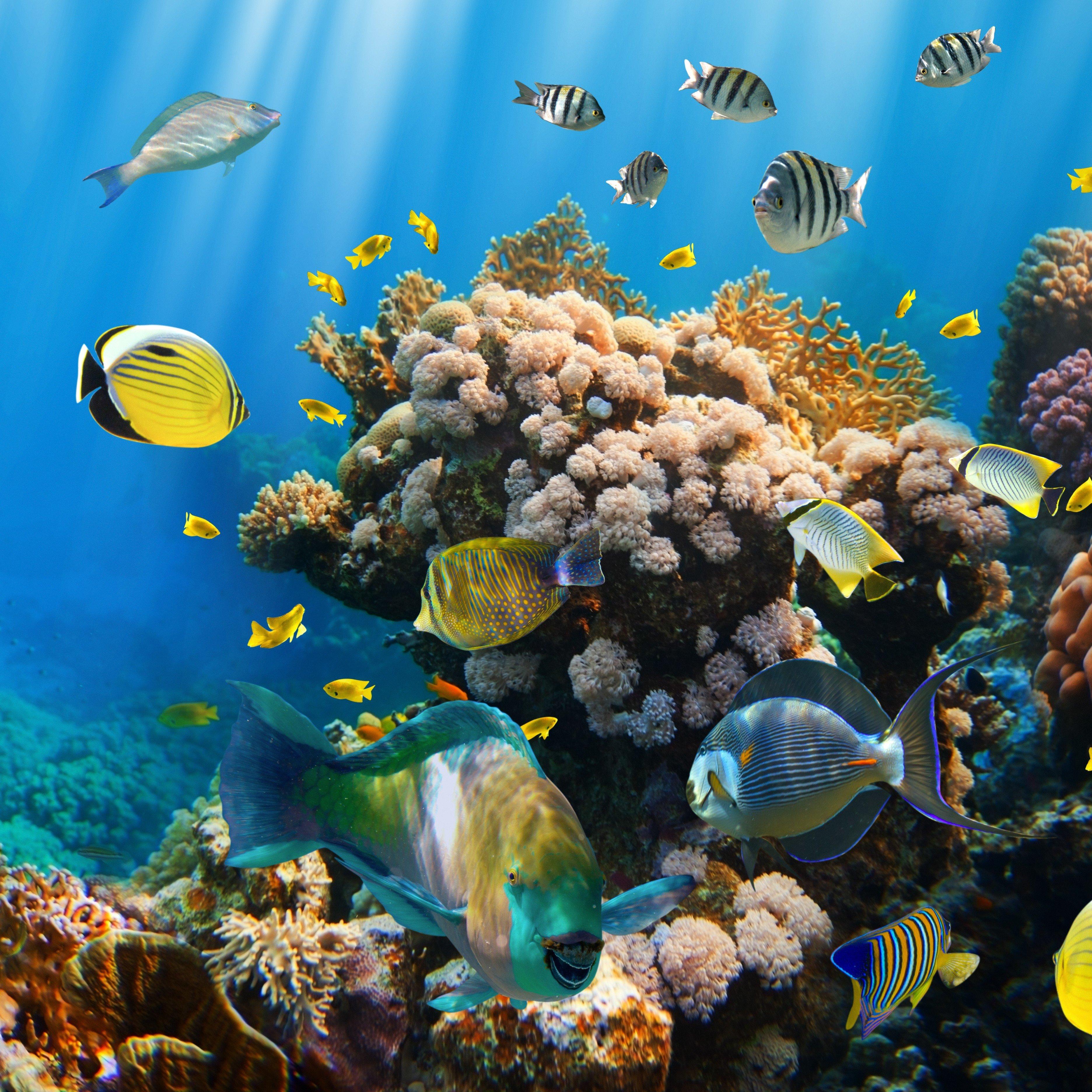 Coral Reef Background: Ocean Reef Wallpaper