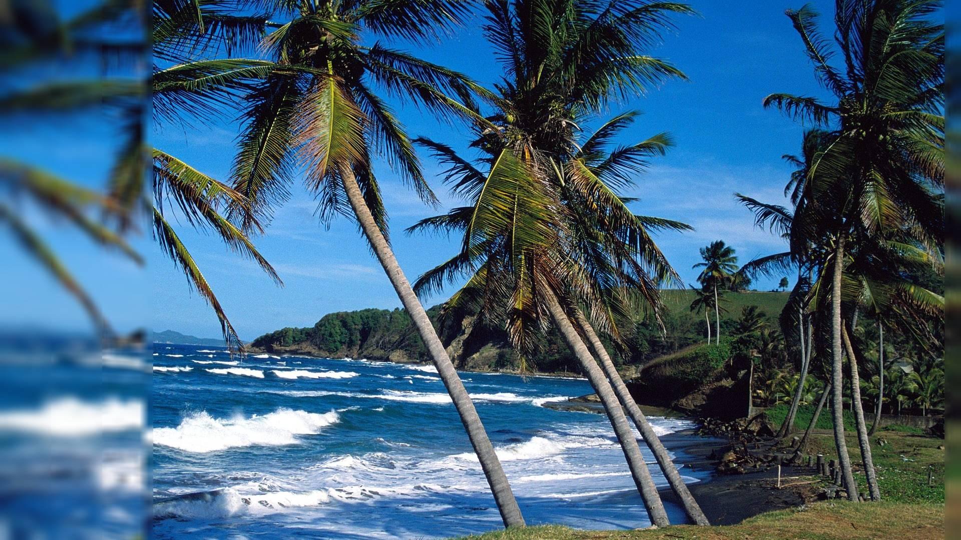 48 free maxine wallpapers for desktop on wallpapersafari - Free palm tree screensavers ...