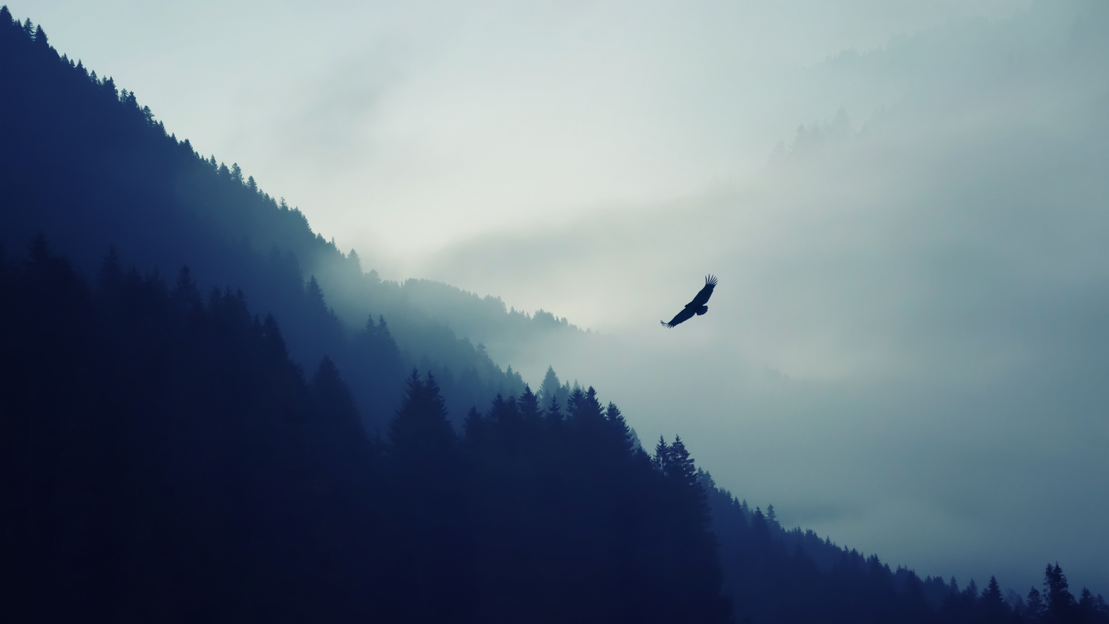 mountain eagle fog landscape ultrahd 4k wallpaper wallpaper background 3840x2160