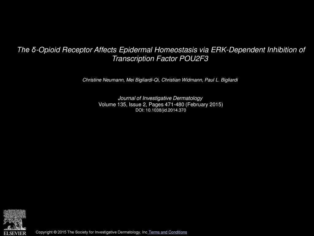 The  Opioid Receptor Affects Epidermal Homeostasis via ERK 1024x768