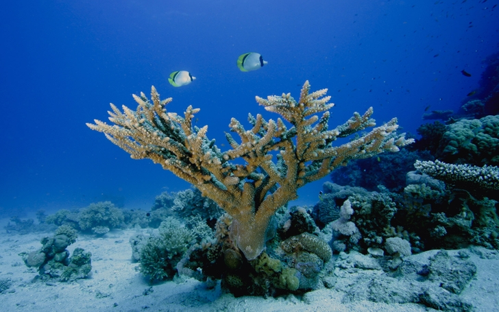 ocean underwater coral reef sea 1920x1200 wallpaper Nature Sea HD High 728x455