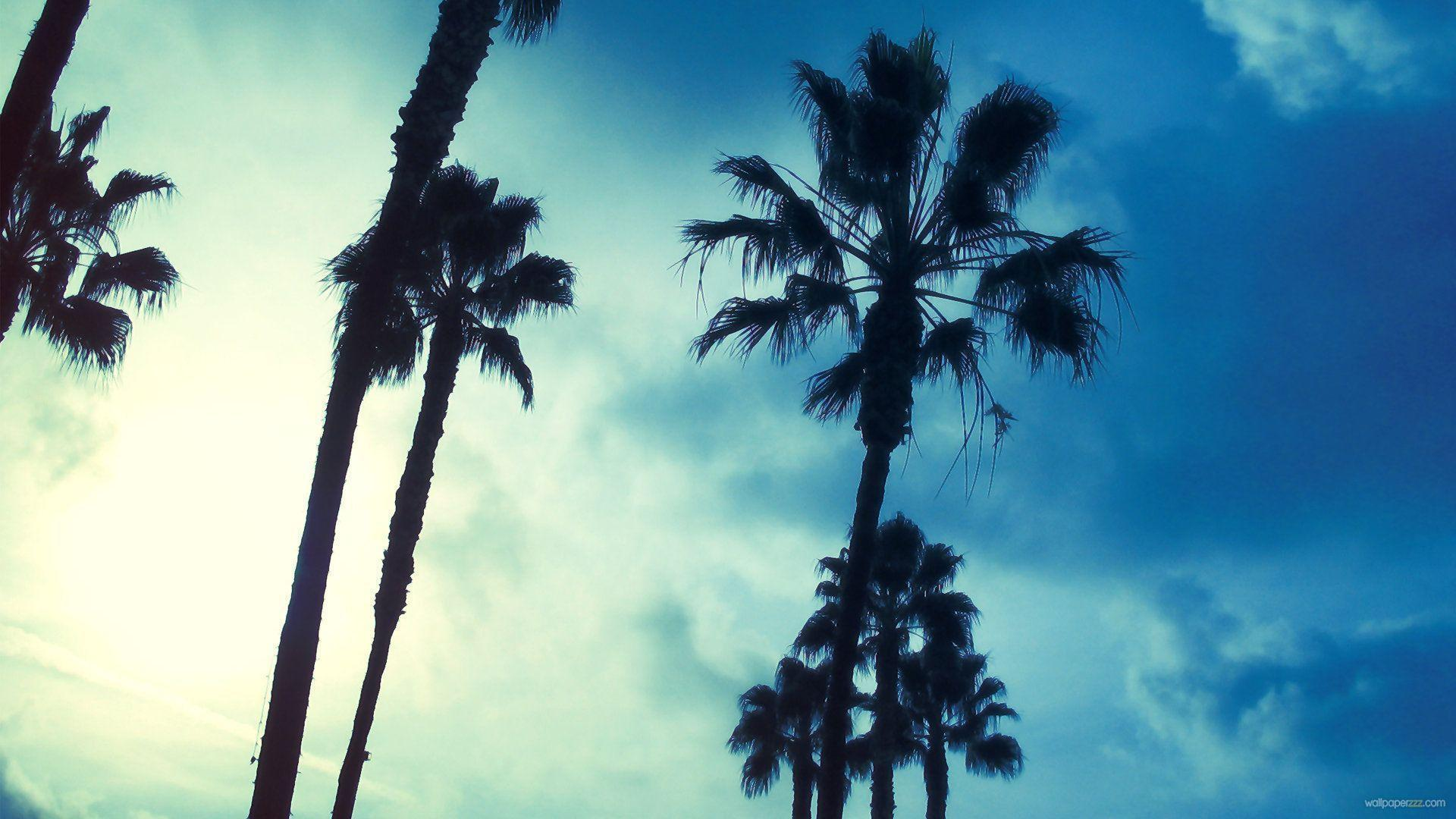 Palm Tree Wallpapers 1920x1080