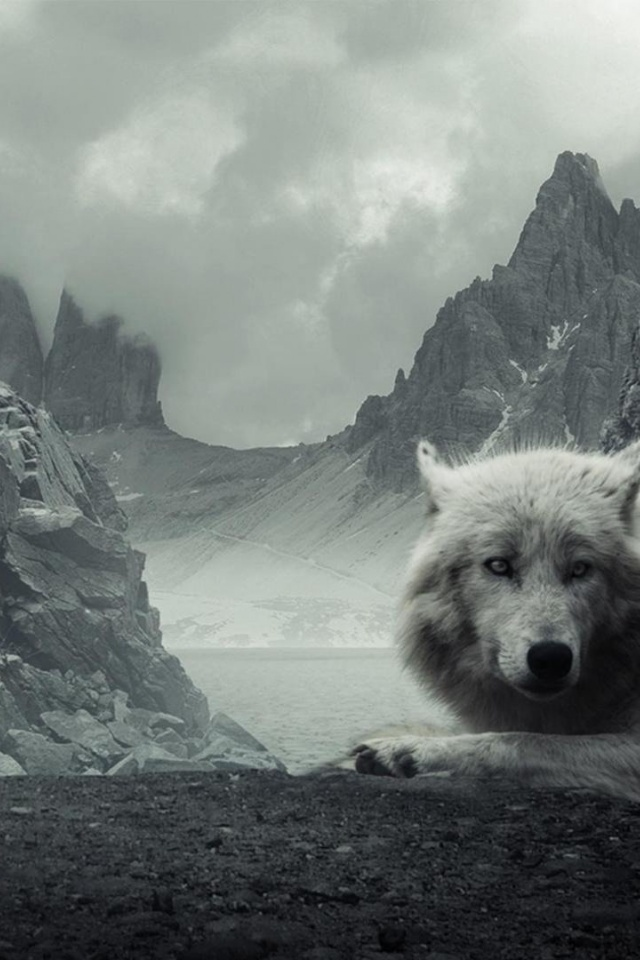 iPhone background Wolf from category abstract wallpapers for iPhone 640x960