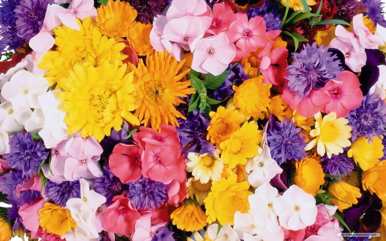 1440x900px Beautiful Fall Flowers Laptop Wallpaper Wallpapersafari