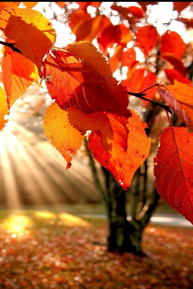 Backgrounds Wallpapers Autumn Fall Autumn Iphone Backgrounds Screen 640x960