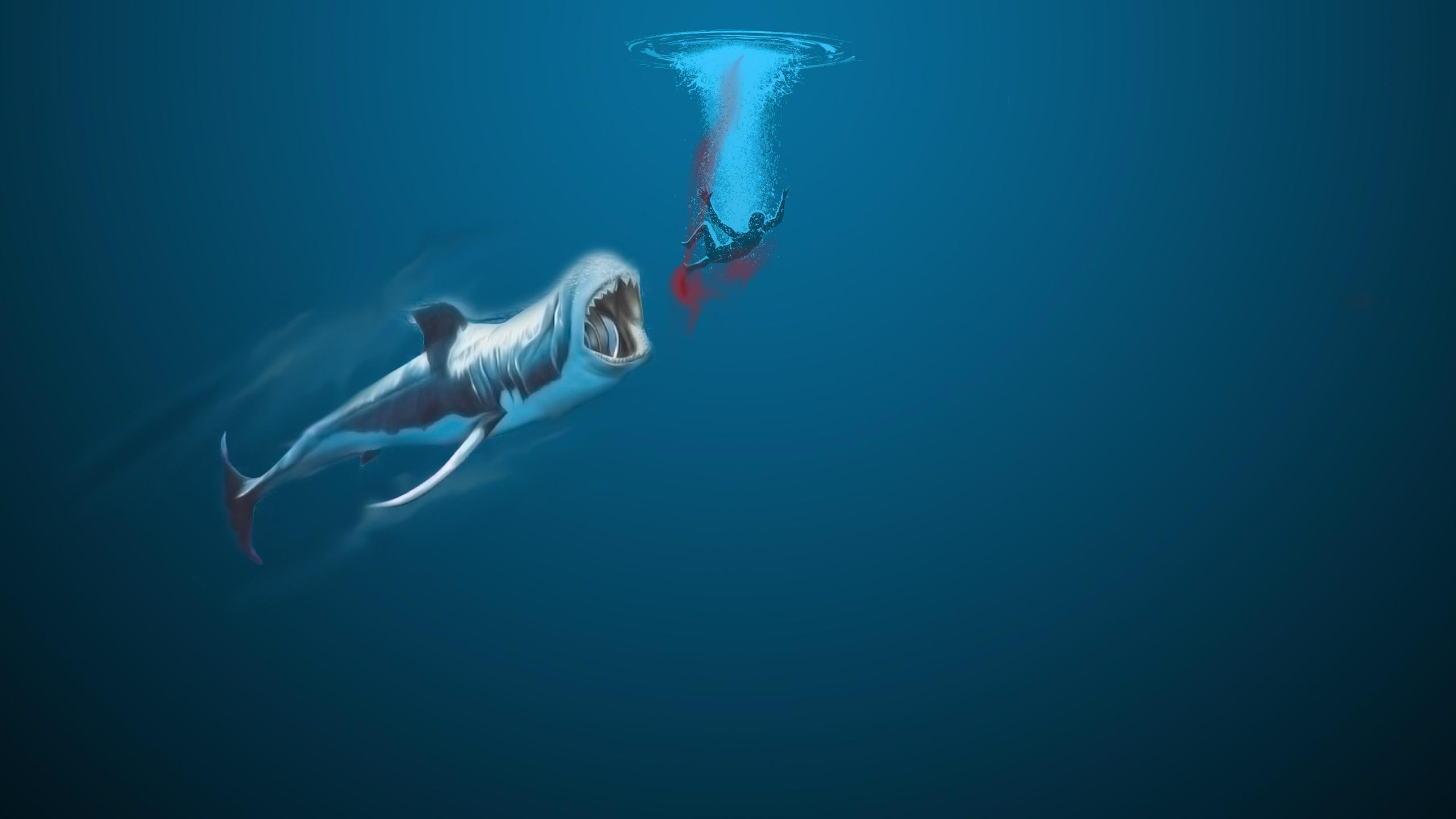 46 Shark Attack Wallpaper On Wallpapersafari