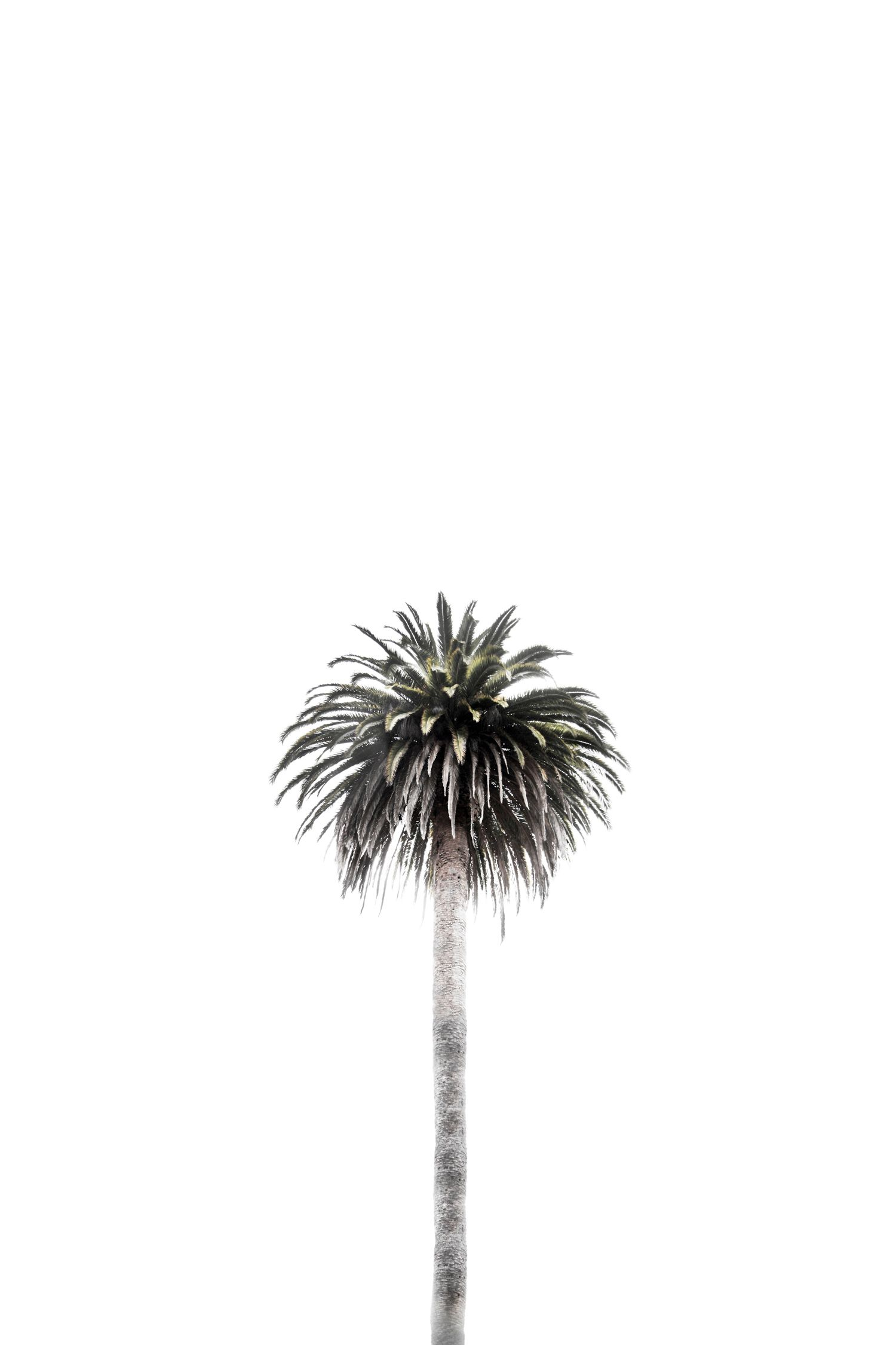Pin by Mishka on Inspirational Quotes Palm tree background 1500x2250