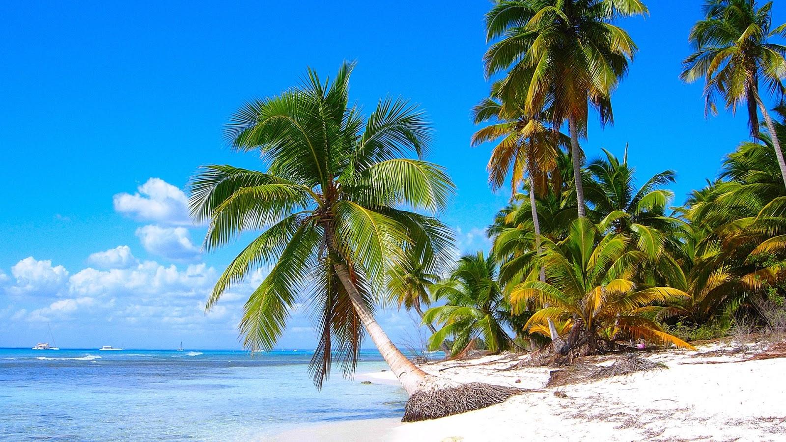 Caribbean Coconut Beach HDQ Wallpapers 1600x900