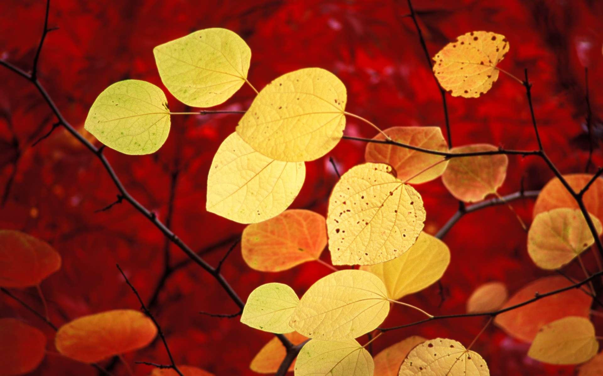 Autumn   Windows 7 Wallpaper   de Vizualizator 1920x1200