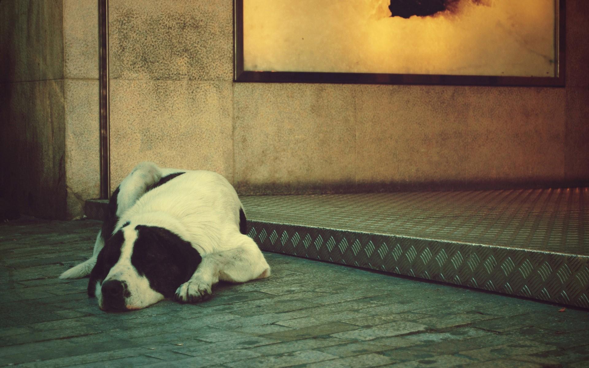 Sleeping dog wallpaper 10007 1920x1200