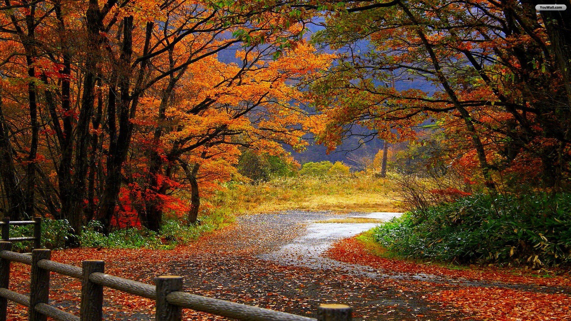 Autumn Scenery Wallpaper   wallpaperwallpapersfree wallpaper 1920x1080