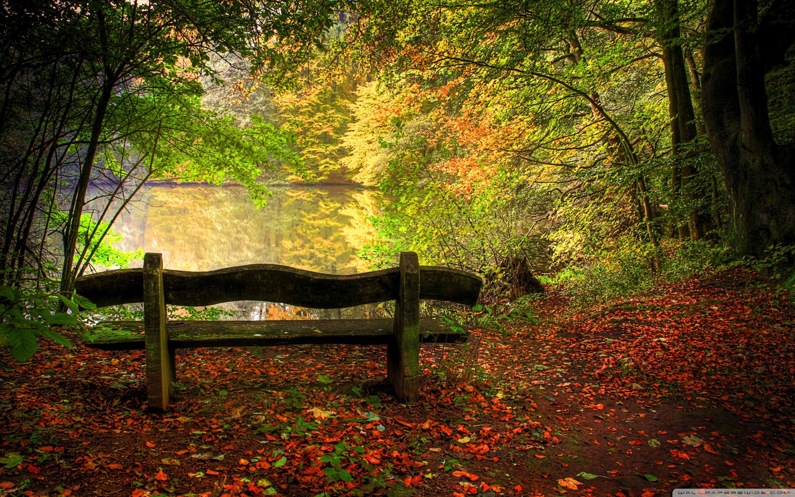 Autumn Wallpaper   Empty Bench In Fall Scene 2560x1600