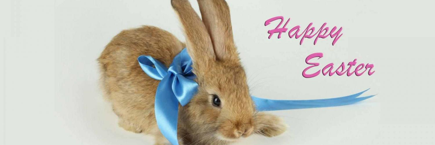 hd wallpaper happy easter bunny   Background Wallpapers 1500x500