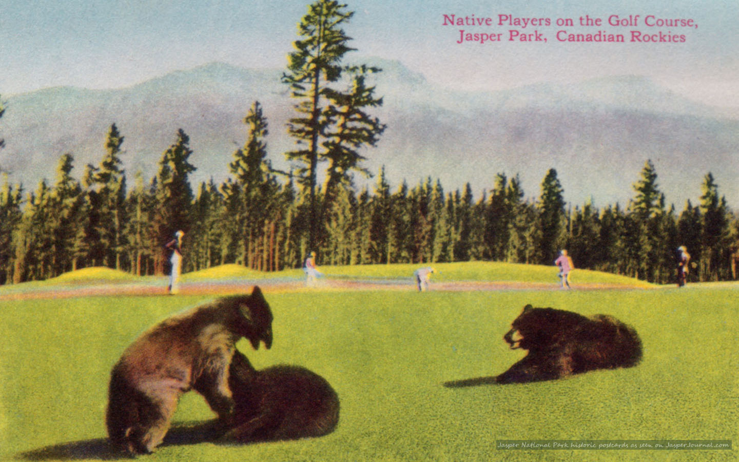 Jasper National Park Photo Bears on the Golf Course   DH Walls 1440x900