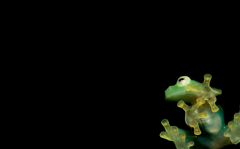 Frog wallpaper 2048x1152 HQ WALLPAPER   30757 1440x900