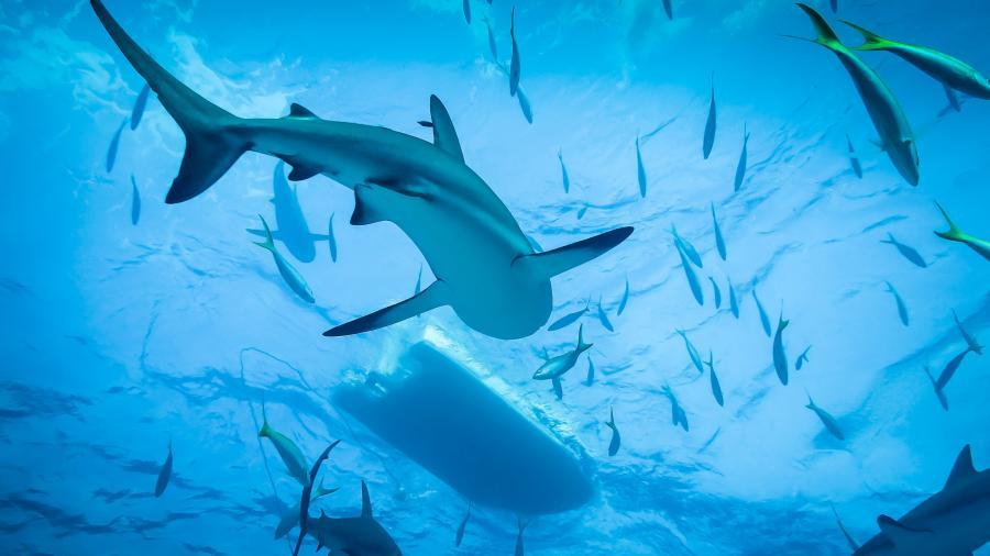 wallpaper details name blue ocean reef sharks 4k wallpapers 900x506