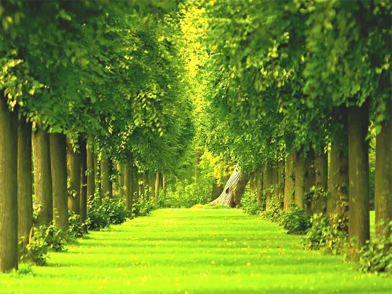 garden hd wallpaper   Choice Wallpaper Choice Wallpaper 800x600