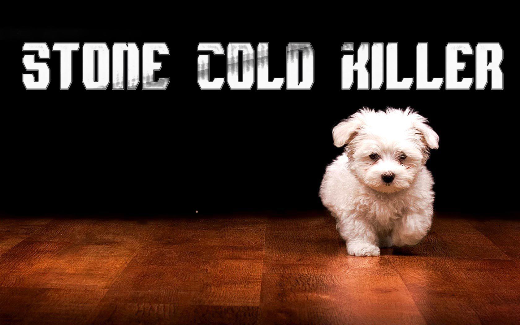 Funny Dog Meme Backgrounds : Cute puppy wallpaper funny wallpapersafari
