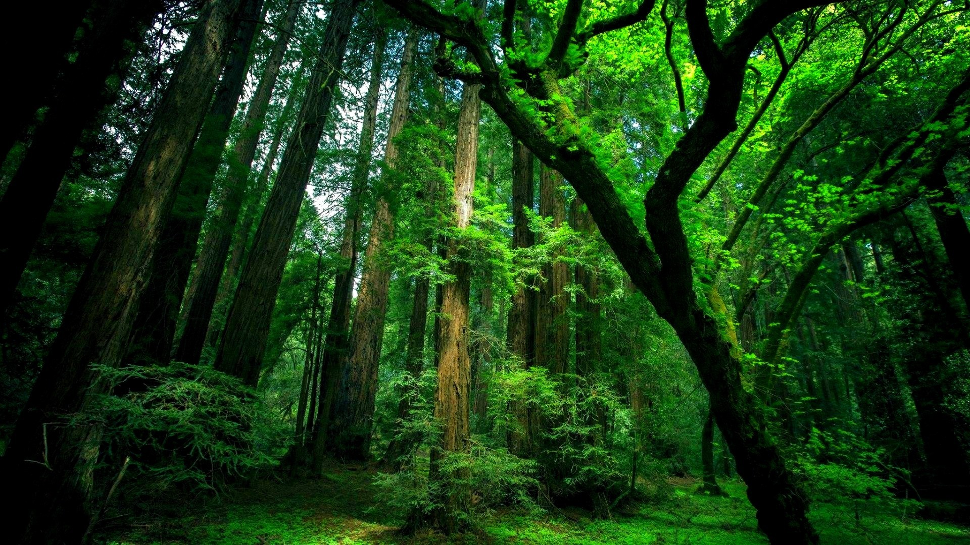 Wallpaperspoints Natural green forest wallpaper Full HD 1920x1080