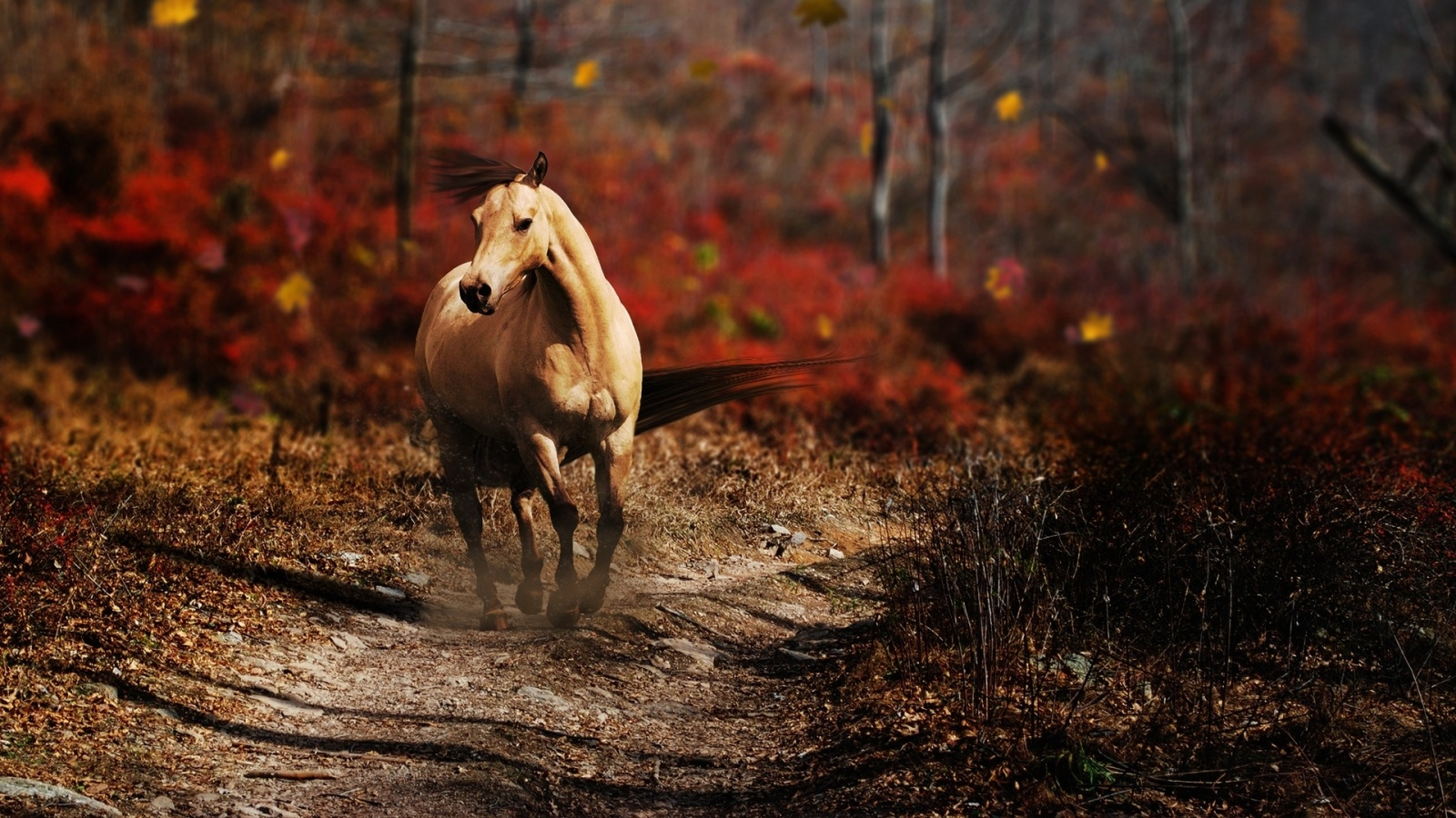 fighting wallpaper latest horse wallpaper awesome horse wallpaper pair 1600x900